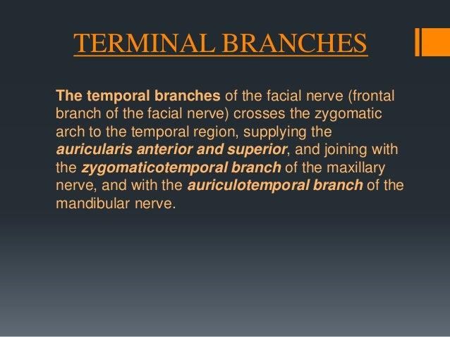 Branches of Distribution  Facial canal A. Nerve to stapedius B. Chorda tympani  Stylomastoid foramen A. Posterior auricula...