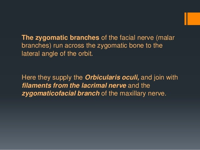 Special Visceral Efferent/Branchial Motor  Premotor cortex  motor cortex  corticobulbar tract  bilateral facial motor ...