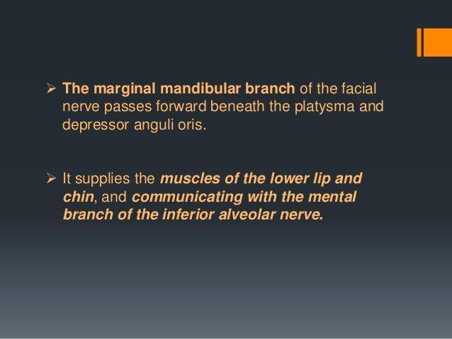 General Sensory Afferent/Sensory Sensation to auricular concha, EAC wall, part of TMJ, postauricular skin Through Cell bod...