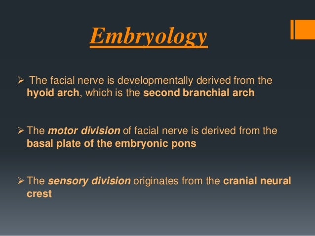  Facial nerve course, branching pattern, and anatomical relationships are established during the first 3 months of prenat...