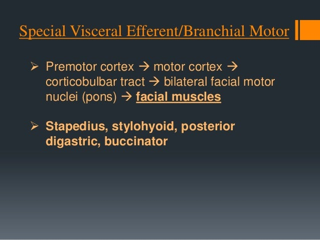 Type II facial nerve major connection between buccal & zygomatic nerves