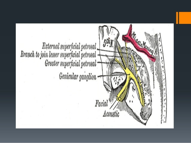 Applied Surgical anatomy of Facial Nerve in Oral & Maxillofacial Surgery  Damage to facial nerve is possible in severe ma...