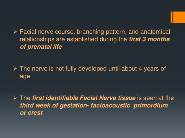 Facial nerve embryology: 4th week  By the end of the 4th week, the facial and acoustic portions are more distinct  The f...