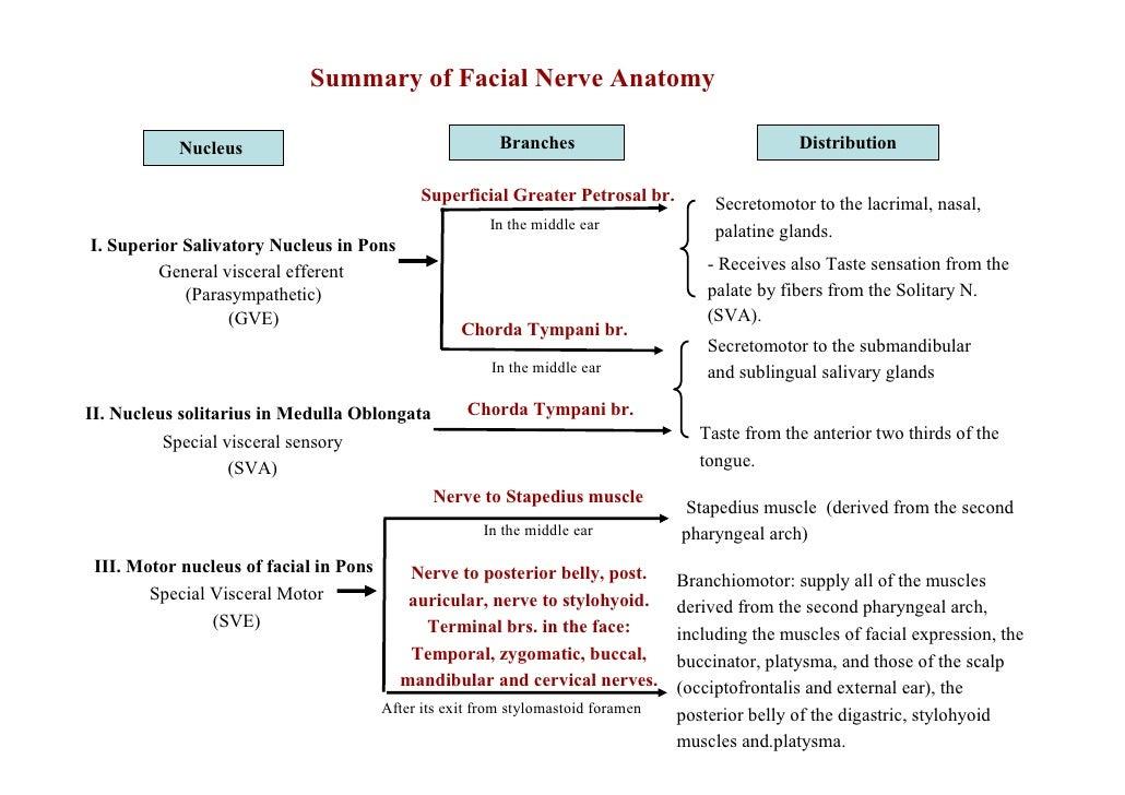 Facial Nerve Summary