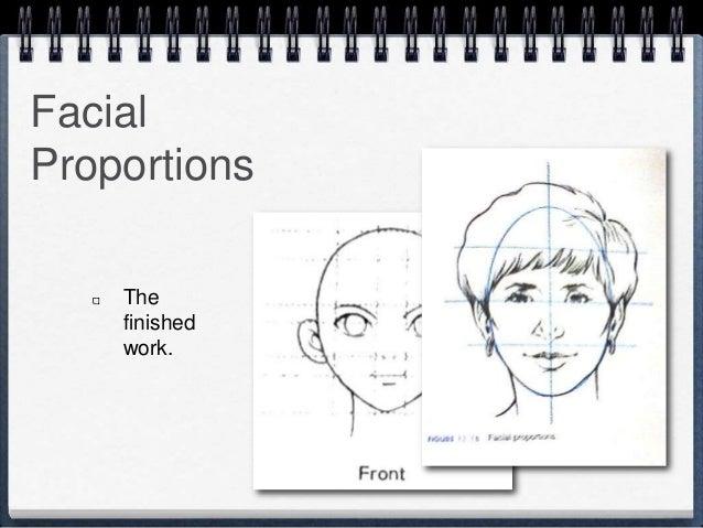 Facial Proportions Art