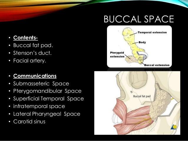 Submandibular duct dissection