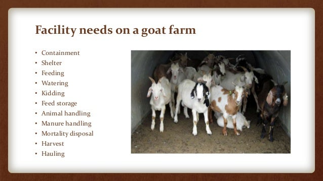 Facilities for Small-Scale Goat Farms