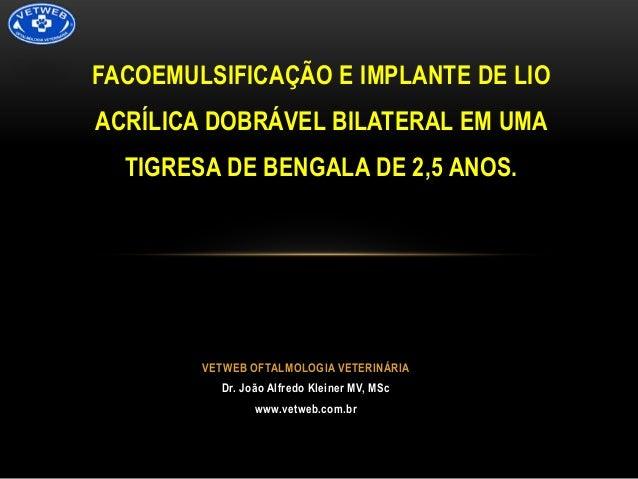 FACOEMULSIFICAÇÃO E IMPLANTE DE LIO  ACRÍLICA DOBRÁVEL BILATERAL EM UMA TIGRESA DE BENGALA DE 2,5 ANOS.  VETWEB OFTALMOLOG...