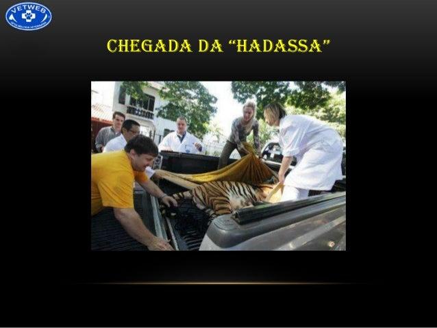 """CHEGADA DA """"HADASSA"""""""