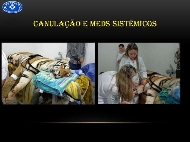 CANULAÇÃO E MEDS SISTÊMICOS