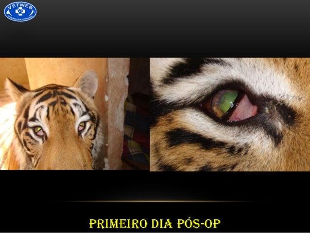 DIA 2 PÓS-OP