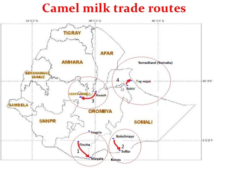 Pastoral Innovation in Somali Region-Town Camels and Milk