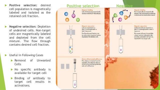 No sperm cells in semen