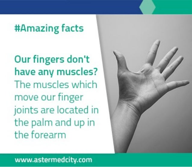 amazing facts about human body, Muscles