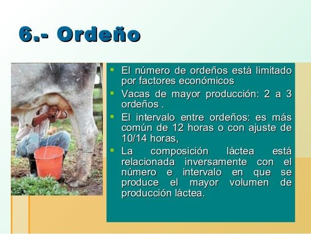 6.- Ordeño  El número de ordeños está limitado por factores económicos  Vacas de mayor producción: 2 a 3 ordeños .  El ...