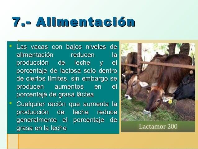 7.- Alimentación  Las vacas con bajos niveles de alimentación reducen la producción de leche y el porcentaje de lactosa s...