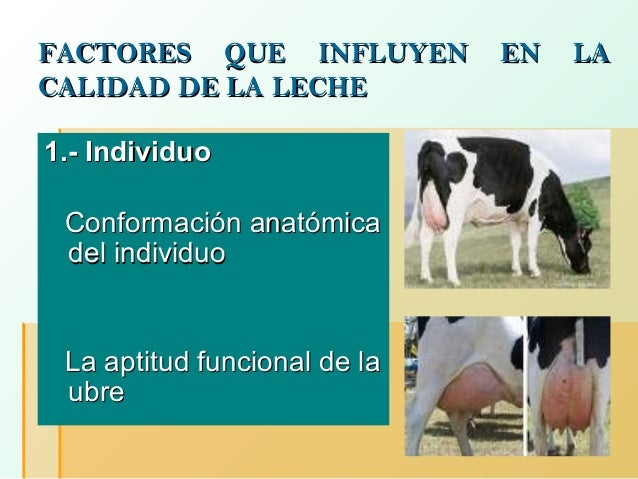 FACTORES QUE INFLUYEN CALIDAD DE LA LECHE 1.- Individuo Conformación anatómica del individuo  La aptitud funcional de la u...