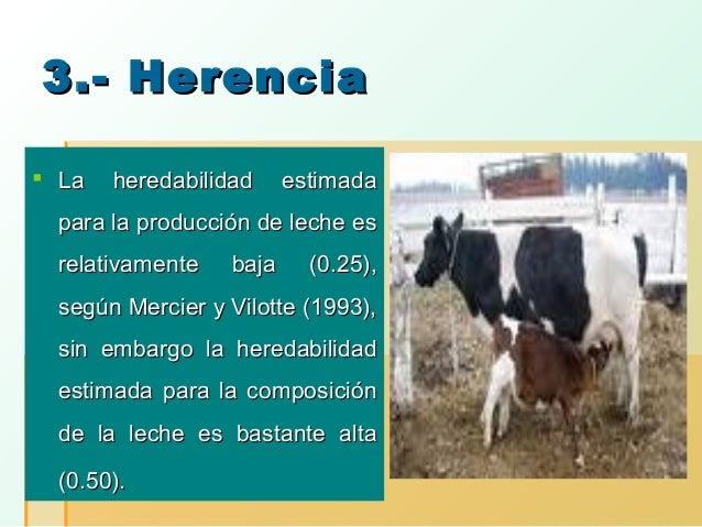 3.- Herencia  La  heredabilidad  estimada  para la producción de leche es relativamente  baja  (0.25),  según Mercier y V...