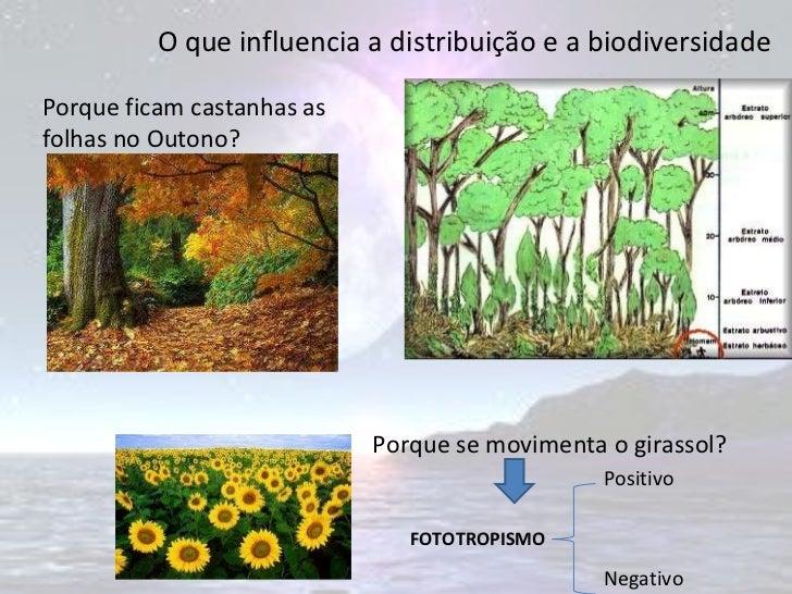 O que influencia a distribuição e a biodiversidade Porque ficam castanhas as folhas no Outono? Porque se movimenta o giras...