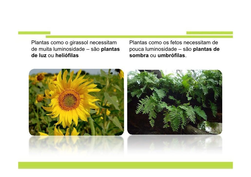 plantas como o girassol necessitam plantas como os fetos necessitam