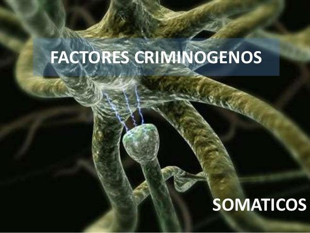 FACTORES CRIMINOGENOS                SOMATICOS