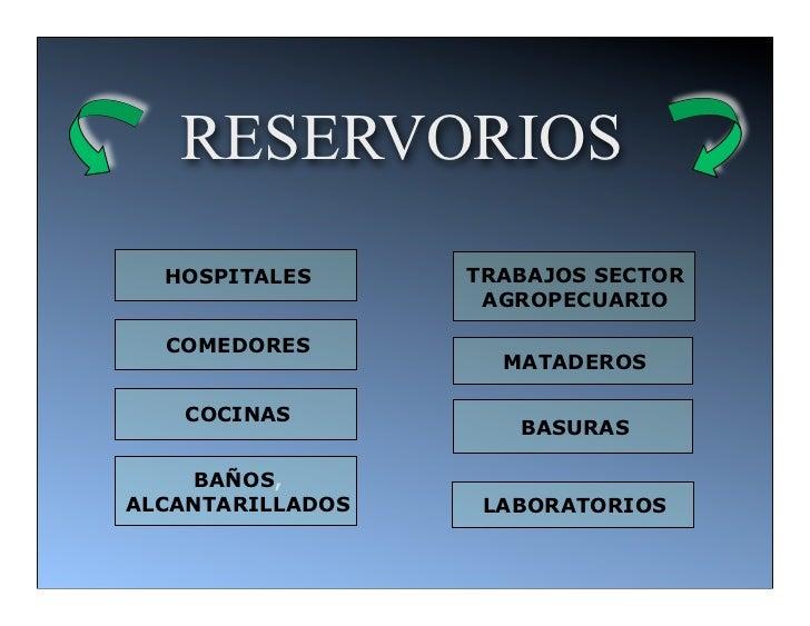 RESERVORIOS  HOSPITALES      TRABAJOS SECTOR                   AGROPECUARIO  COMEDORES                    MATADEROS   COCI...