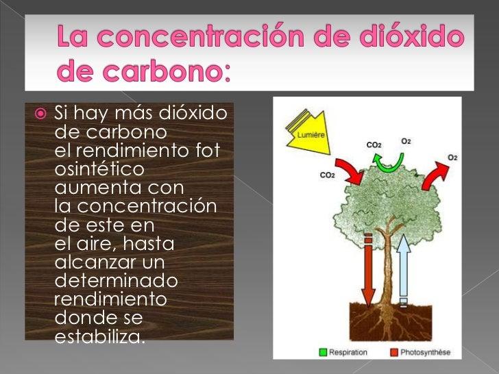Funcion del dixido de carbono en la fotosintesis