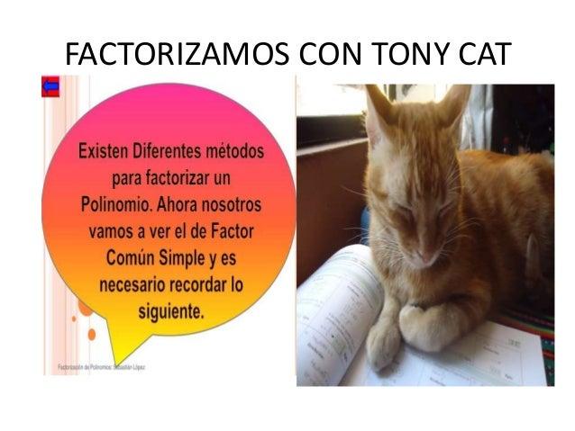 FACTORIZAMOS CON TONY CAT