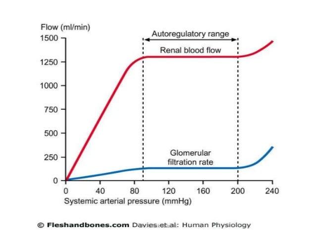 Factors Affecting G F R