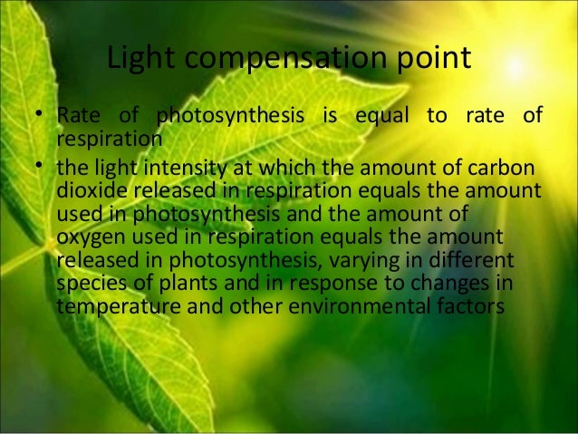 photosynthesis rate Big idea investigation 5 t95 cellular processes: 2 energy and communication investigation 5 photosynthesis what factors affect the rate of photosynthesis in living leaves.