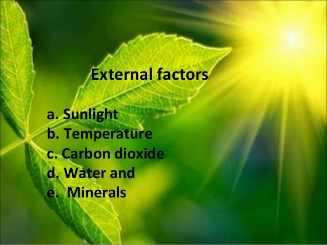 three factors that affect the rate of photosynthesis Three major factors affect photosynthetic rates light intensity: generally, higher light intensity results in faster photosynthetic rates carbon dioxide.