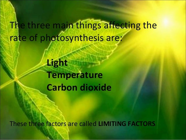 measuring the rate of photosynthesis using