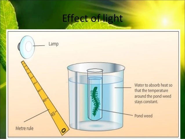 the impact of external factors: water and the carbon dioxide on the rate of photosynthesis essay The impact of very high and low temperatures, light, water, carbon dioxide, mineral salts, stress factors (drought, soil salinity level, nutrient salt deficit), also air pollution (sulfur and nitrogen dioxides) on crop photosynthetic activity was studied ,.