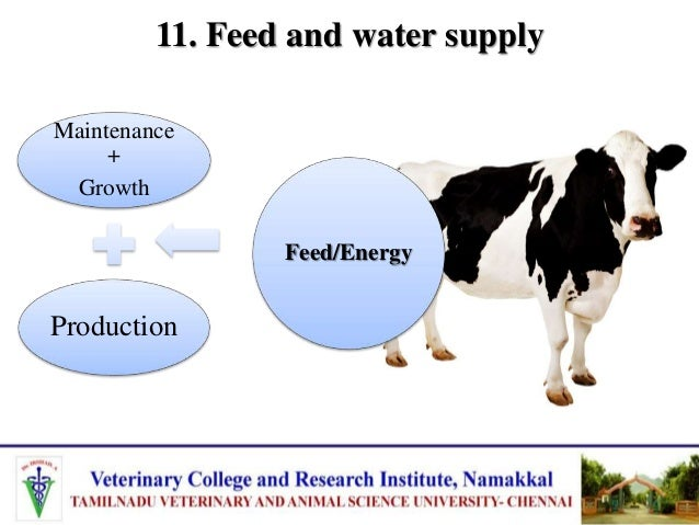 11. Feed and water supply Inadequate feed nutrients probably limit the secretion of milk Galactopoisis is closely related ...