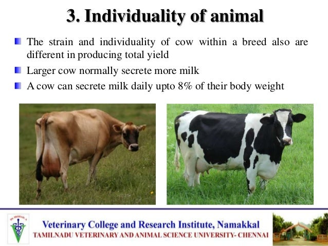 3. Individuality of animal The strain and individuality of cow within a breed also are different in producing total yield ...
