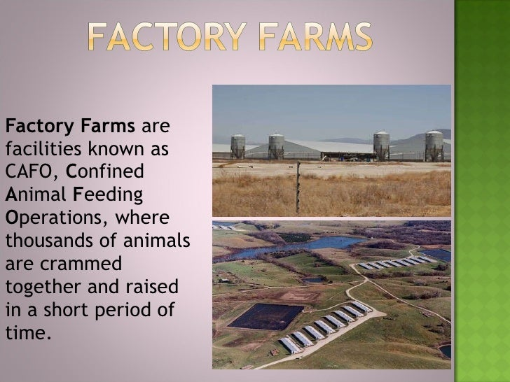 the impact of factory farms Animals' angels is committed to ensuring all animals are treated humanely factory farming is an often-found culprit of inhumane treatment of livestock.