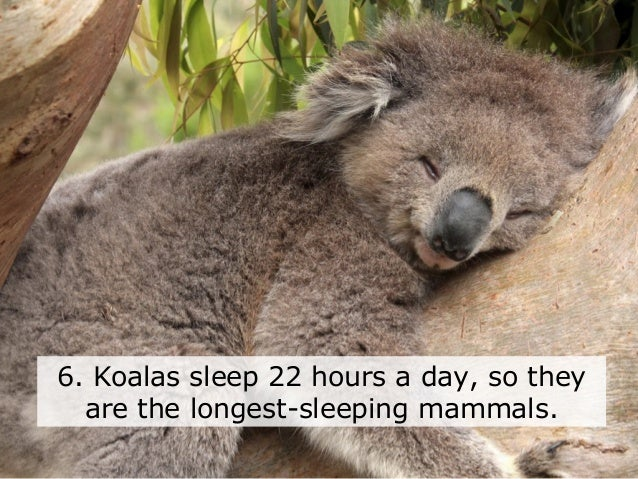 10 interesting facts about sleep