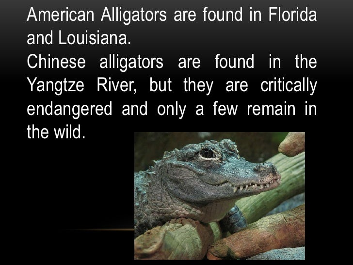 Facts about alligators for Good facts about america