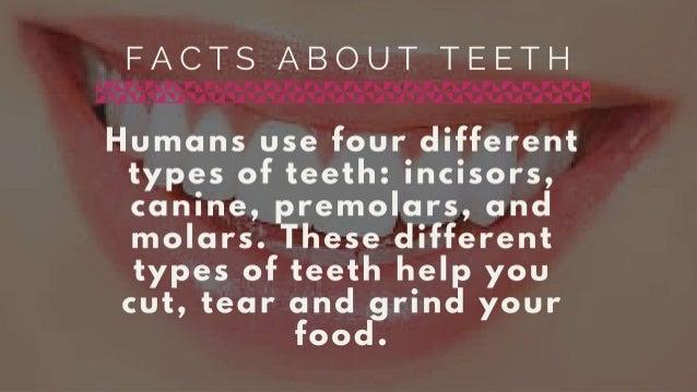 Facts About Teeth & Dental Hygiene  Slide 3