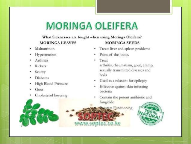 Facts about moringa oleifera A Presentation By Mr  Allah dad Khan Vi…