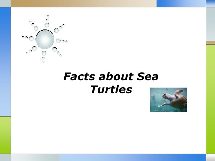 Facts about Sea    Turtles