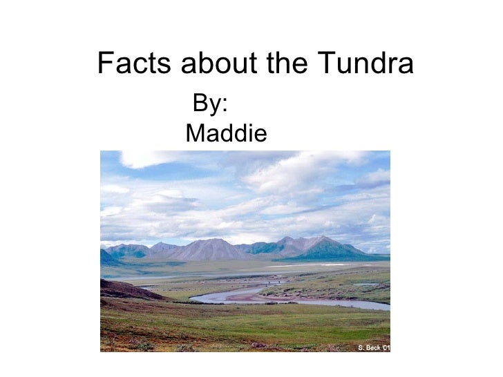 Facts about the Tundra By: Maddie