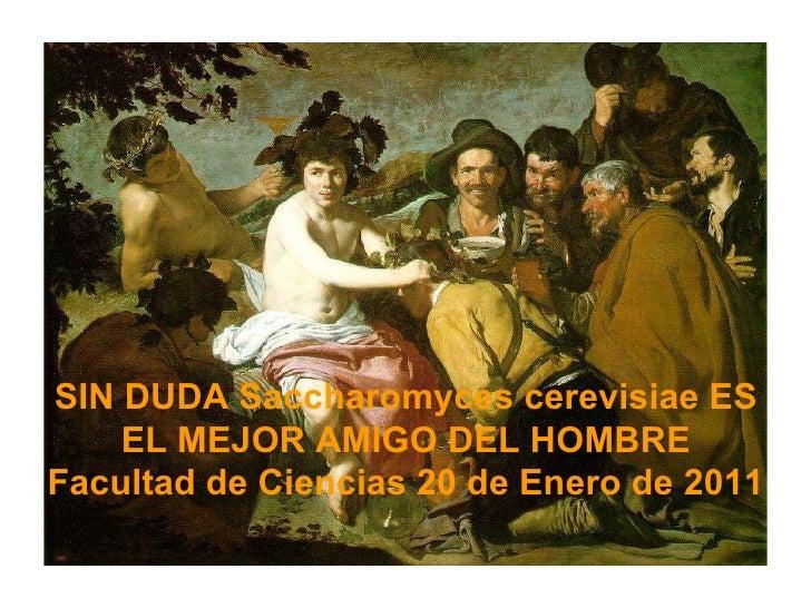 SIN DUDA Saccharomyces cerevisiae ES EL MEJOR AMIGO DEL HOMBRE Facultad de Ciencias 20 de Enero de 2011
