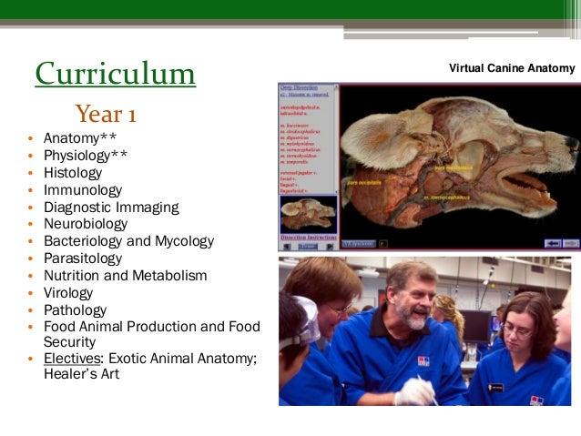 Fine Colorado State Virtual Canine Anatomy Photo - Anatomy And ...