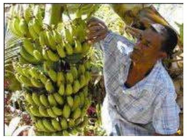 Fairtrade ppt