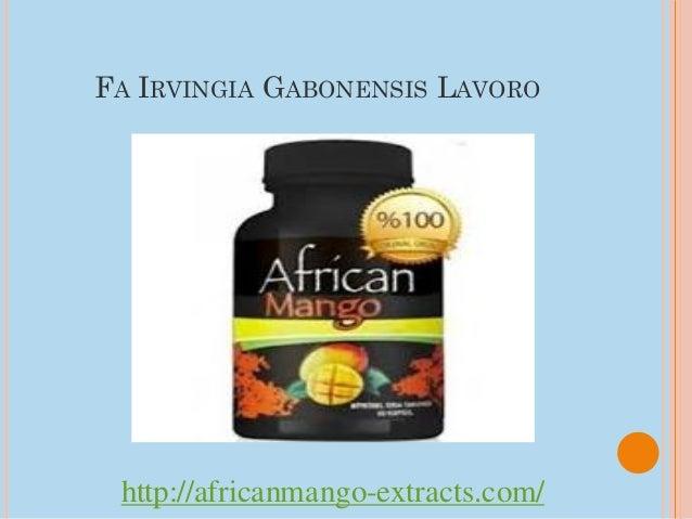 FA IRVINGIA GABONENSIS LAVORO http://africanmango-extracts.com/