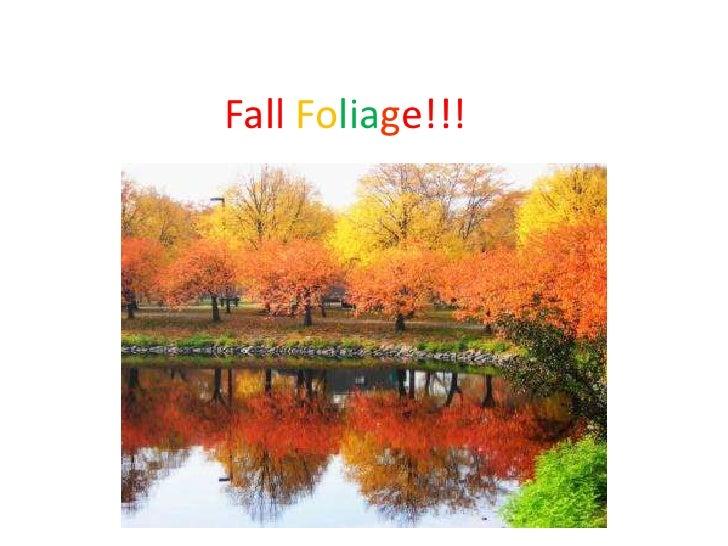 Fall Foliage!!!