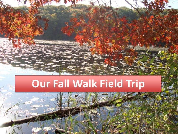 Our Fall Walk Field Trip