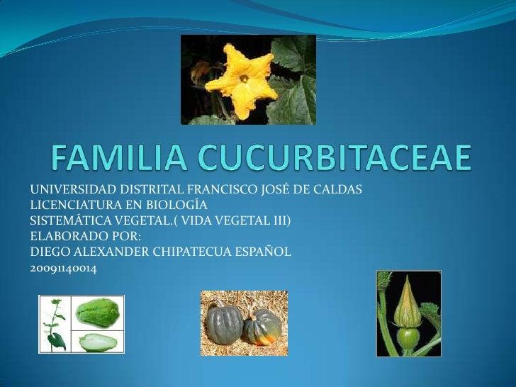 FAMILIA CUCURBITACEAE<br />UNIVERSIDAD DISTRITAL FRANCISCO JOSÉ DE CALDAS<br />LICENCIATURA EN BIOLOGÍA<br />SISTEMÁTICA V...