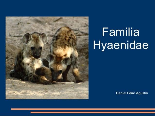 FamiliaHyaenidae   Daniel Peiro Agustín